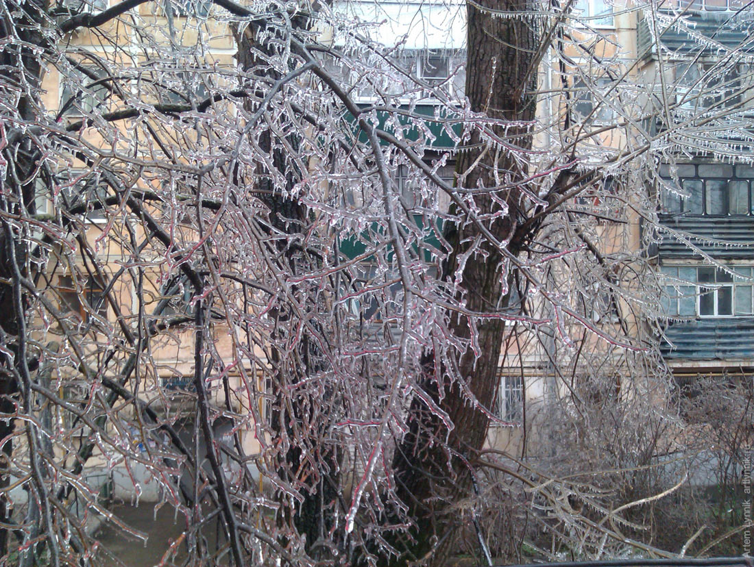 ice, icicle, my, nature, tree